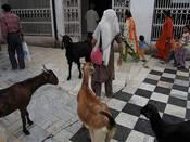 Vorausgegangen war ein Streit um die Schlachtung von Ziegen. Foto: Flickr.com/amitrunchal